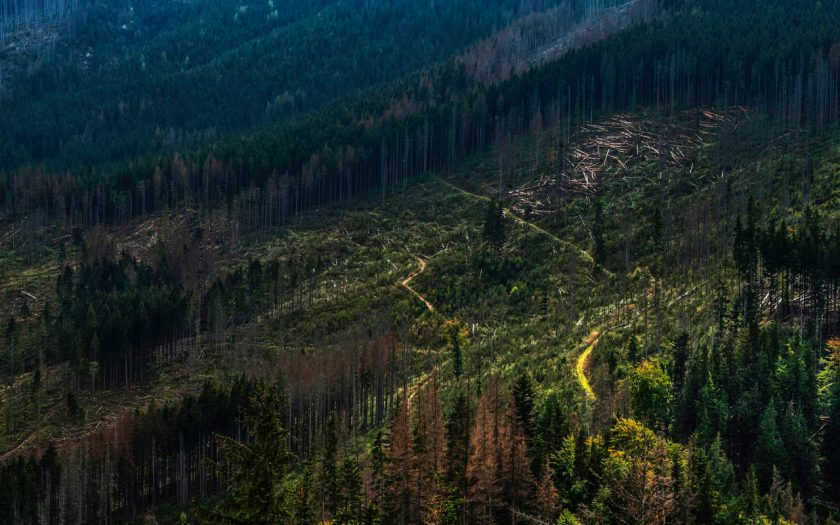 bomen gekapt vlakte